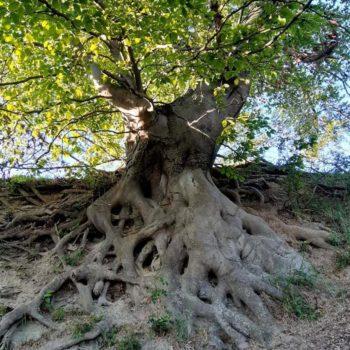 Unberührte Natur (Eineborn); Amely Kröger