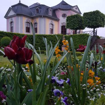 Blühendes Schloss (Dornburger Schlossgarten); Kati Schenke