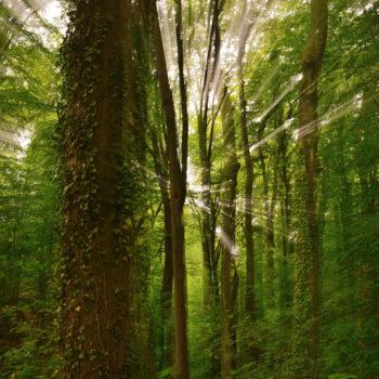 Im Rausch des Waldes (Waldecker Buchen); Gerd Trömmler