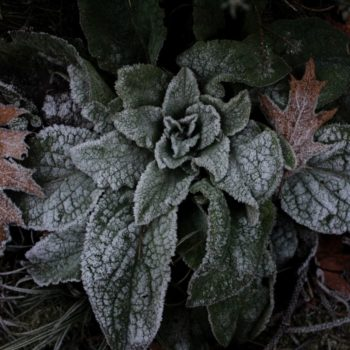 Der Wald im Winterschlaf (bei Waldeck); Noah Zetzsche