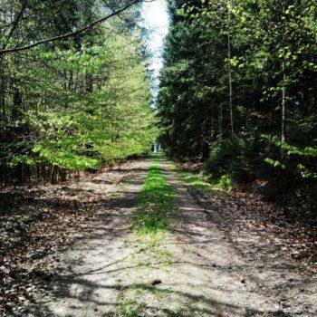 Naturpfade im Holzland (bei Bad Klosterlausnitz); Bruno Anlauf